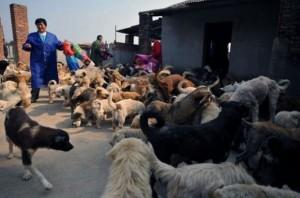 Το μεγαλύτερο καταφύγιο αδέσποτων ζώων!