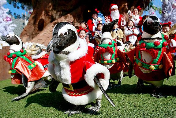 Perierga.gr - Χριστουγεννιάτικοι πιγκουίνοι....!