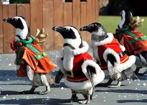 Πιγκουίνοι στο κλίμα των Χριστουγέννων