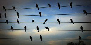 Πουλιά συνθέτουν μουσική