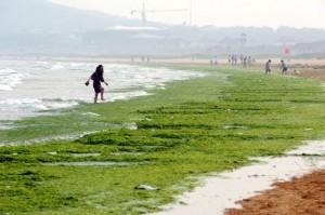 Πράσινες παλίρροιες