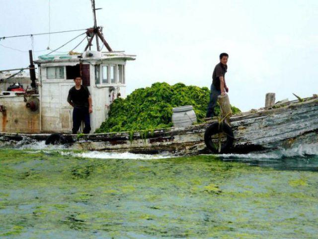 Perierga.gr - Οι πράσινες παλίρροιες