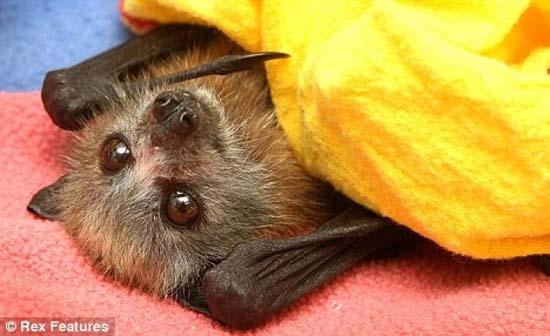 Perierga.gr - Μωρά νυχτερίδες!