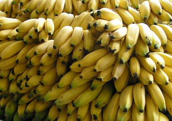 Perierga.gr - Μπανάνες δεν υπάρχουν πια...