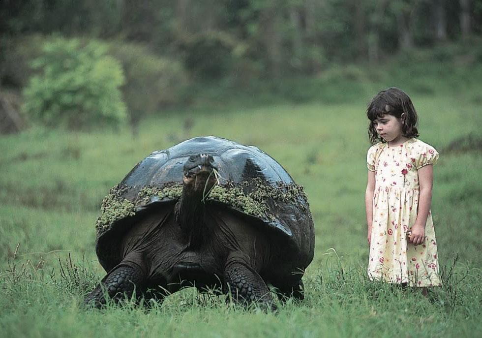 Perierga.gr - Χελώνες στα Γκαλαπάγκος!