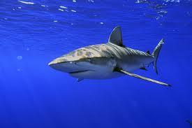 Perierga.gr - Καρχαρίας