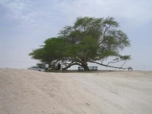 Δέντρο στη μέση της ερήμου