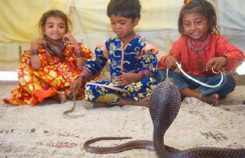 Perierga.gr - Παίζοντας με τα φίδια