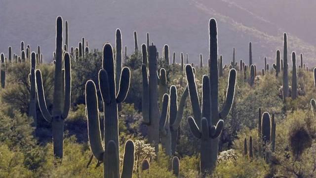 Perierga.gr - Τα σύνορα μεταξύ ΗΠΑ και Μεξικό