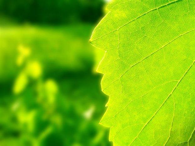 Perierga.gr - Τεχνητά φύλλα