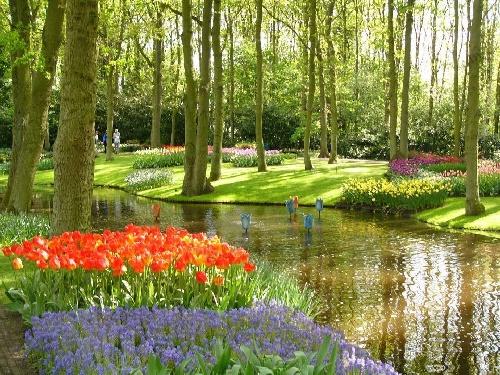 Perierga.gr - Οι τουλίπες στην Ολλανδία!