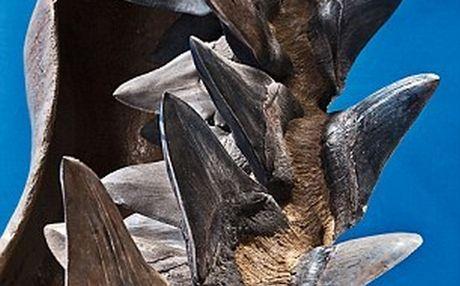 Perierga.gr - Σαγόνια καρχαρία