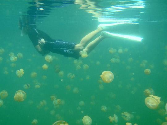 Perierga.gr - Η λίμνη με τις μέδουσες!