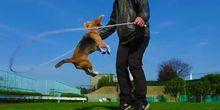 Perierga.gr - Σούπερ σκυλί