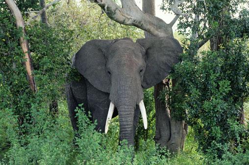Perierga.gr - Άγρια ζώα μεθούν στη ζούγκλα