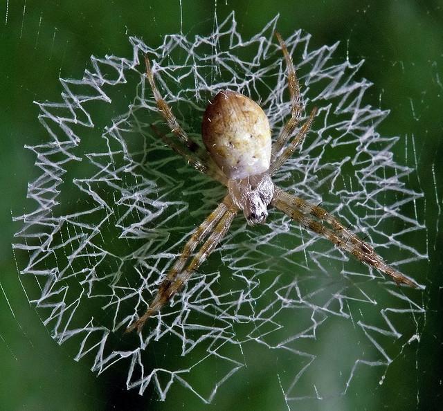 Perierga.gr - Εντυπωσιακοί ιστοί από αράχνες!