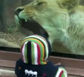 Perierga.gr - Ατρόμητος πιτσιρικάς δε φοβάται το λιοντάρι