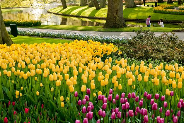 Perierga.gr - Ο μεγαλύτερος ανθισμένος κήπος