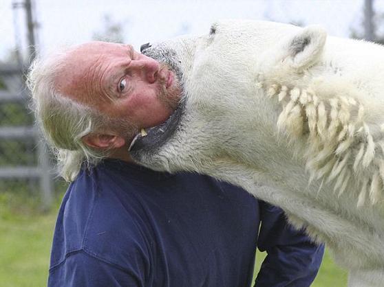 Perierga.gr - Στο στόμα της αρκούδας