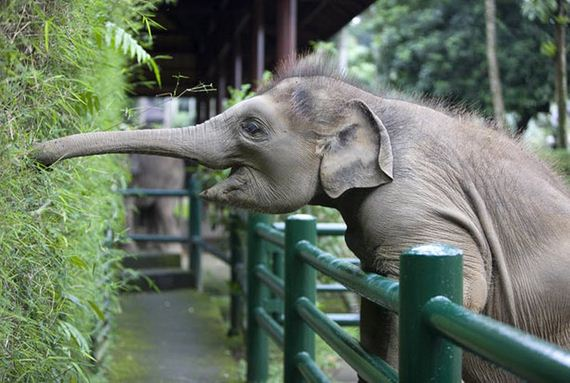Perierga.gr - Ελέφαντας