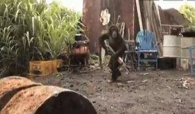 Perierga.gr - Ο πίθηκος με το Καλάσνικοφ!