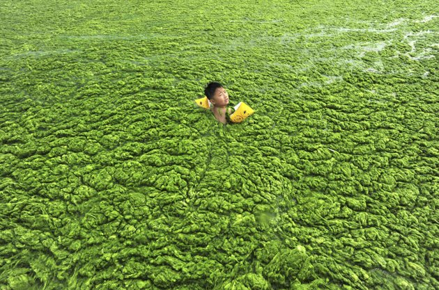 Perierga.gr - Πράσινη παραλία στην Κίνα