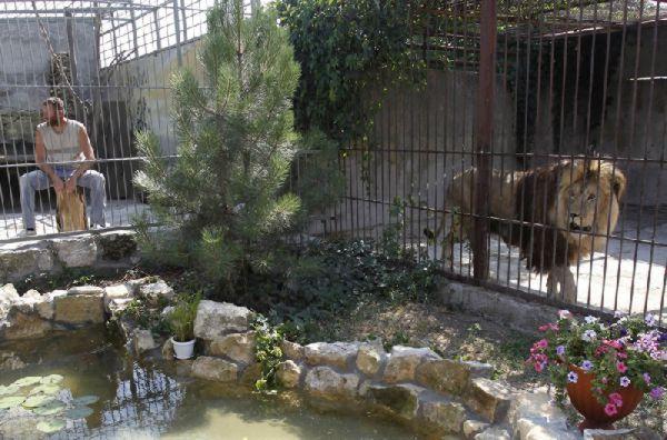 Perierga.gr - Συγκατοικώντας με μία λέαινα