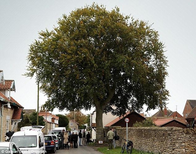 Perierga.gr - Ζει μερόνυχτα πάνω σε δέντρο για να μην το κόψουν!