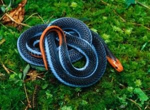 Εντυπωσιακά φίδια