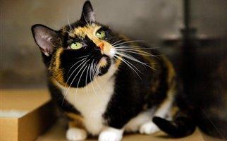 Perierga.gr - Γάτα που χάθηκε, βρέθηκε 5 χρόνια μετά, 3000 χλμ μακριά!