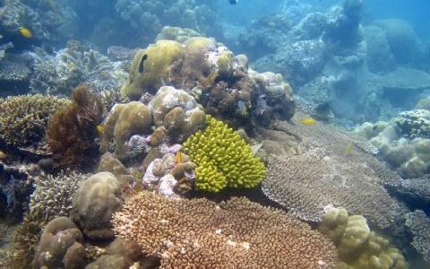 Perierga.gr - Τα κοράλλια θα χαθούν ως το τέλος του αιώνα