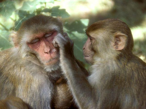 Perierga.gr - Τα εξυπνότερα ζώα του πλανήτη!