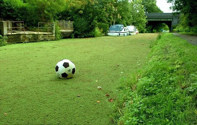 Perierga.gr - Κανάλι... σαν γήπεδο ποδοσφαίρου!