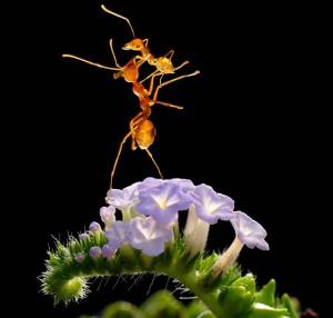 Χορευτικές φιγούρες από... μυρμήγκια