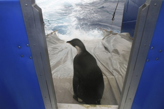 Perierga.gr - Πέθανε ο πιγκουίνος Happy Feet;