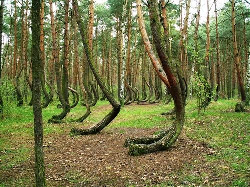 Perierga.gr - Ή στραβό είναι το δάσος ή στραβά… τα μάτια μας!