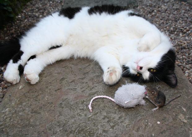 Perierga.gr - Γάτα ντροπή για ολόκληρο το είδος