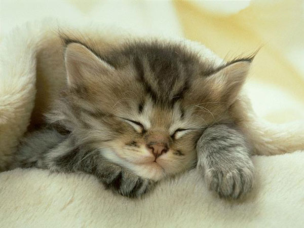 perierga.gr - Μια αδέσποτη γάτα δίνει μαθήματα ανθρωπιάς!