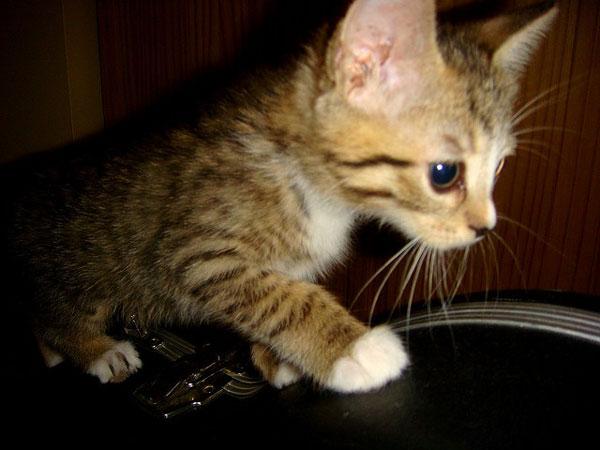 perierga.gr - Τρία γατάκια είναι οι... DJ's του μέλλοντος!