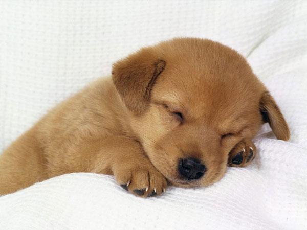 perierga.gr - Φαντάζεστε τι κάνει ο σκύλος όταν βλέπει εφιάλτη; Μάλλον όχι!
