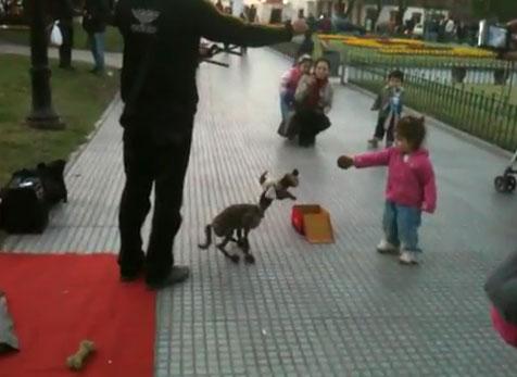 Perierga.gr - Εκπληκτικός χειρισμός σκύλου-μαριονέτας