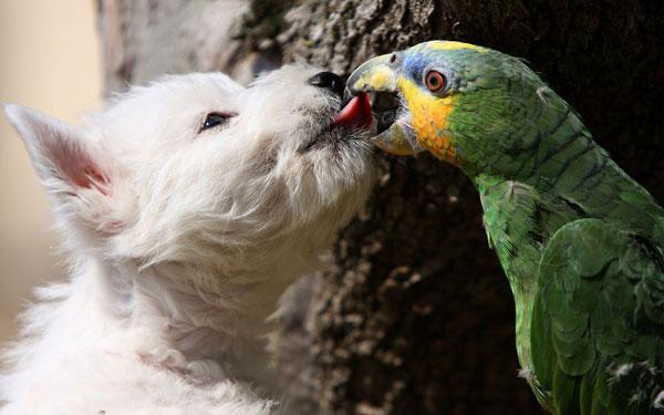 perierga.gr - Σκύλος VS παπαγάλου: Η μάχη για το κόκαλο!!!