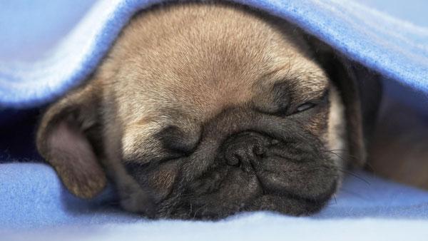 perierga.gr - Όταν ο σκύλος κρυώνει... ξέρει τι να κάνει!