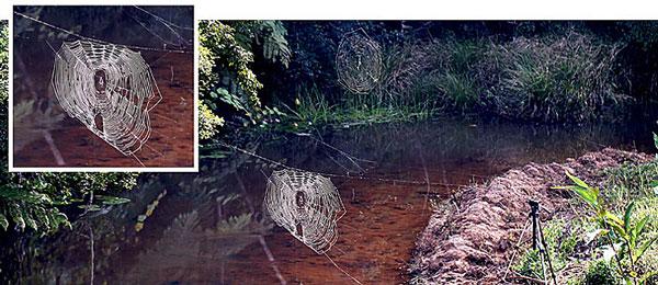 perierga.gr - Ο μεγαλύτερος ιστός αράχνης στον πλανήτη!