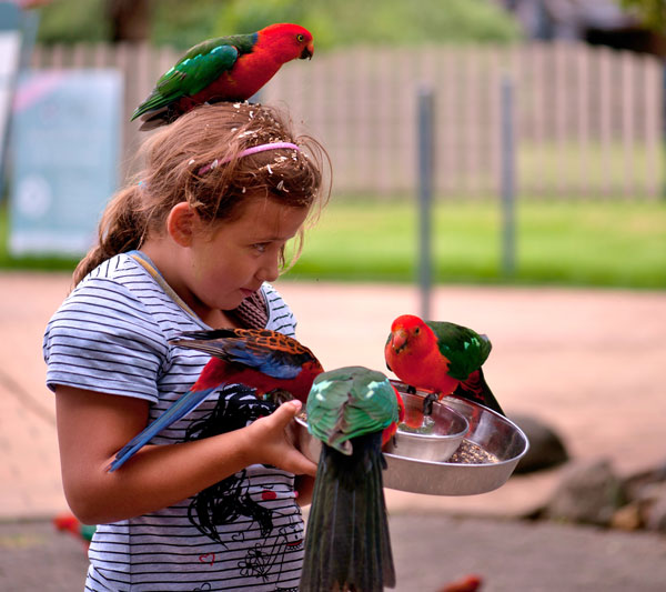 perierga.gr - Απίστευτο! Ένας ξενώνας γέμισε άγριους παπαγάλους!