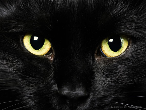perierga.gr - Η Παγκόσμια Ημέρα της... μαύρης γάτας!