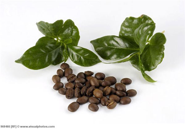 perierga.gr - 15 πράγματα που δεν ξέρετε για τον καφέ!