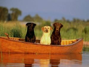 perierga.gr - Αυτός ο σκύλος είναι απίστευτος... ψαράς!