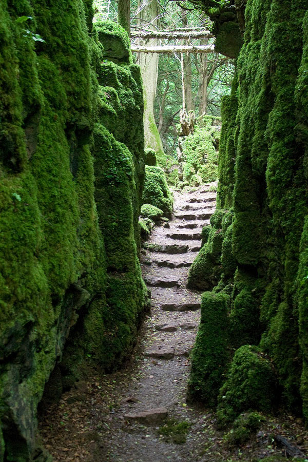 perierga.gr - Puzzlewood: Ένα αρχαίο δάσος... λαβύρινθος!