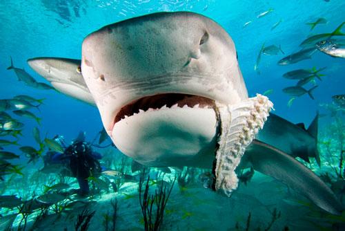 Perierga.gr - Άμυαλοι ψαράδες χάνουν τη λεία τους από καρχαρία